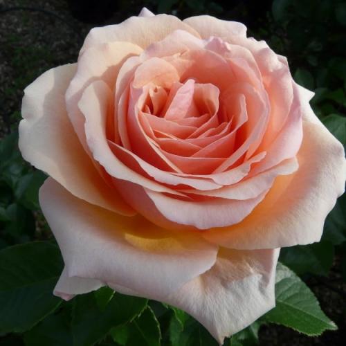 Lynda Bellingham®  HARwise