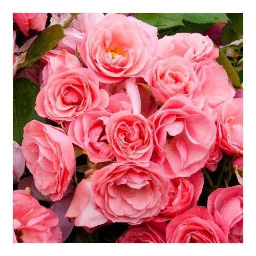 Bouquet de Mariee (DELrosbouq)