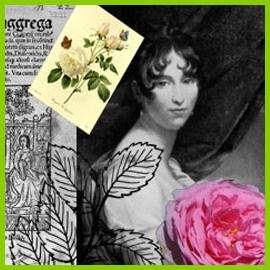 Historické růže