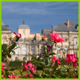 Parkové růže