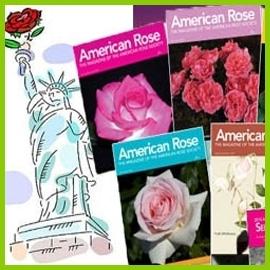 American růže
