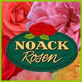 Розы из Noack