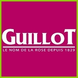 Collection of Guillot