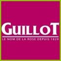 Kolekcja Guillot/Massad