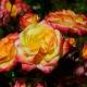 Vulcano Flower Circus ®