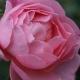 L'Aimant Doux Parfume (HARzola)