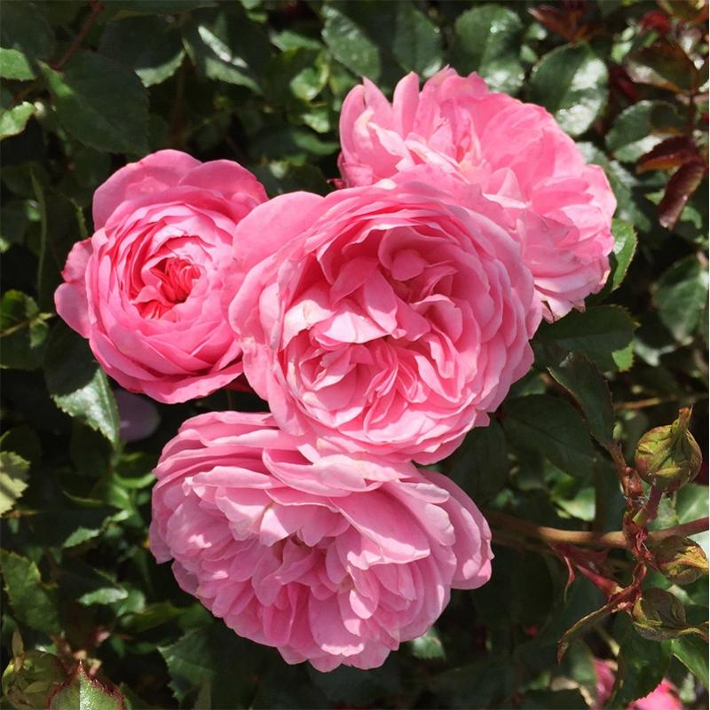 CPH Garden in Bloom®