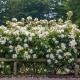 Kew Gardens®  (AUSfence)