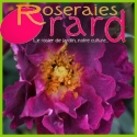 French roses form Orard