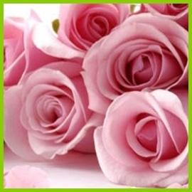 Velkokvěté růže