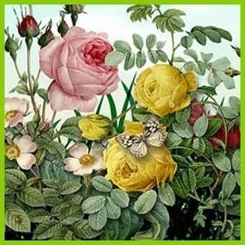 Róże kolekcjonerskie