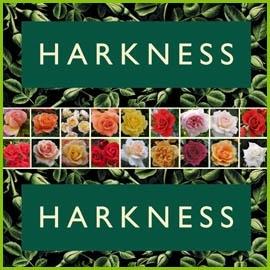 Harkness Rosen