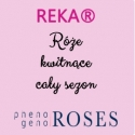 REKA® Flower abundance