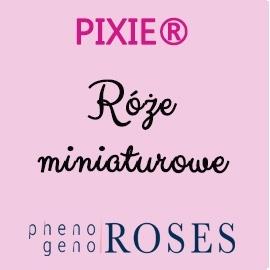 PIXIE® Mniatures