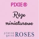 PIXIE® Miniatury