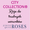 CITY COLLECTION® Róże miejskie