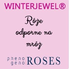 WINTERJEWEL® Róże mrozoodporne