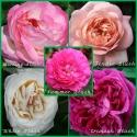 Różane Zestawy