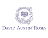 Davif Austin Roses