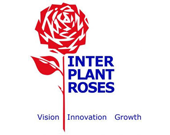 Inter Plant Roses